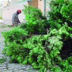 Como solicitar a poda de árvores?