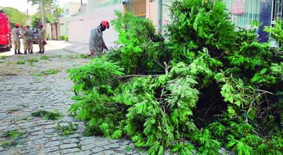 Read more about the article Como solicitar a poda de árvores?